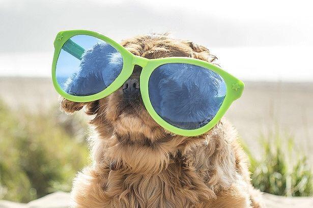 sunglasses weather